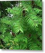The Jutting Sumac Canopy Hungers For Light Metal Print