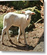 The Kid Metal Print
