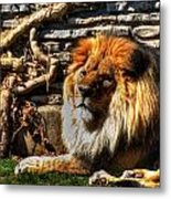 The King Lazy Boy At The Buffalo Zoo Metal Print