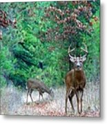 The King Metal Print by Thomas Young