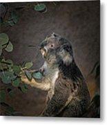 The Koala Metal Print