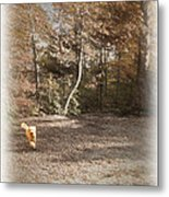 The Labradoodle On The Go Metal Print