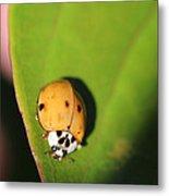 The Lady Bug Metal Print
