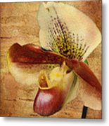 The Lady Slipper Orchid Metal Print