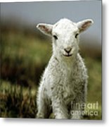 The Lamb Metal Print by Angel  Tarantella