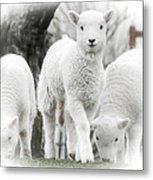 the Lamb is watching Metal Print