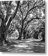 The Lane Bw Metal Print by Steve Harrington