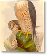 The Lanner Falcon Metal Print