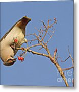 The Last Berries Are For Me Metal Print