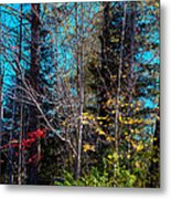 The Last Days Of Autumn Metal Print