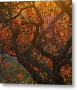 The Last Leaves On The Tree Metal Print by Rebecca Cearley