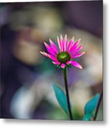 The Last Of Summer - Featured 3 Metal Print