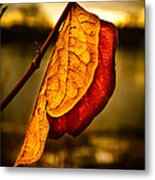 The Leaf Across The River Metal Print by Bob Orsillo