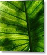 The Leaf Metal Print