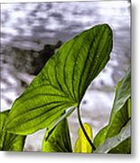 The Leaf Of A Water Plant Metal Print