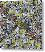 The Leaf Pile Metal Print