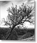 The Leaning Tree Metal Print
