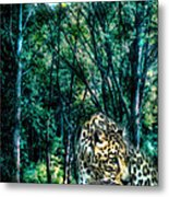 The Leopard Is Hungry Metal Print