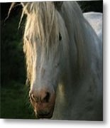 The Light In The Mane Metal Print