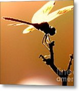 The Light Of Flight Upon The Mosquito Hawk At The Mississippi River In New Orleans Louisiana Metal Print
