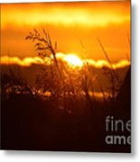 The Light Shines Metal Print by Sheldon Blackwell