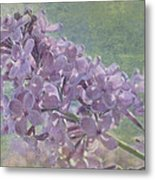 The Lilac Metal Print