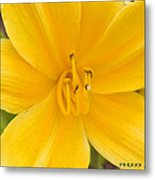 The Lily From Kentucky Metal Print