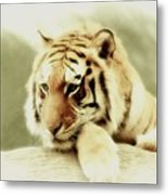 The Lion At Rest Metal Print