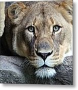 The Lion Queen Metal Print