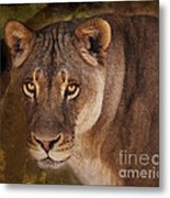 The Lioness  Metal Print