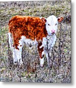 The Little Cow Metal Print