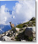 The Little Ibex Metal Print
