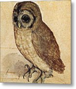 The Little Owl 1508 Metal Print