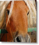 The Little Pony Metal Print