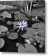 The Lone Flower Metal Print
