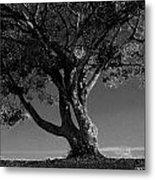 The Lone Tree Black And White Metal Print