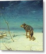 The Lone Wolf Metal Print by Pg Reproductions