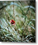 The Lonely Flower Metal Print