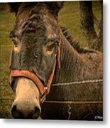 The Lonely Jackass Metal Print
