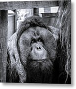 The Lonely One Metal Print