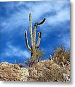 The Lonely Suguaro Metal Print