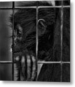 The Look Of Captivity Black And White Metal Print
