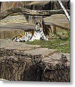 The Lounging Tiger 2 Metal Print