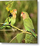 The Lovebirds  Metal Print