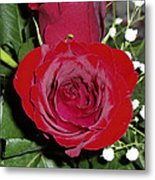 The Lovely Rose Metal Print