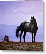 The Majestic Stallion Metal Print