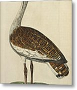 The Male Bustard Metal Print