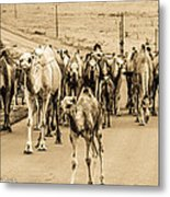 The March Of The Camels Metal Print