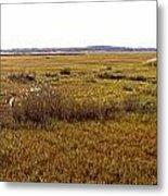 The Marsh At Cape Henlopen Metal Print