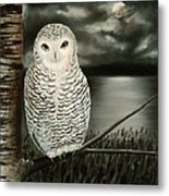 The Marsh At Night Metal Print